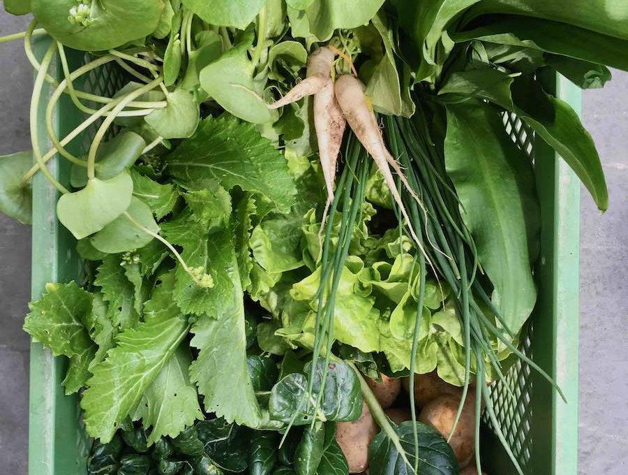 Grüne Kiste mit Mangold, Kohlrabiblättern, Fenchelgrün und anderen grünen Blättern von Gemüse